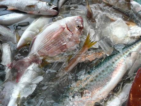 地魚の写真素材 [FYI00121160]