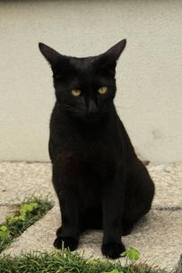 猫の写真素材 [FYI00121215]