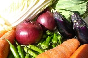 野菜の写真素材 [FYI00121247]
