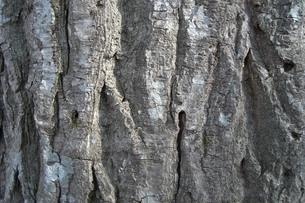 木肌の写真素材 [FYI00121255]