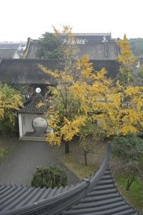 中国・蘇州 北寺塔の秋の写真素材 [FYI00121257]