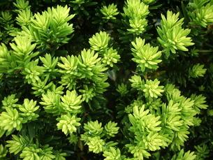 新緑の写真素材 [FYI00121295]