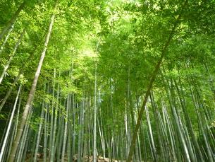 竹林の写真素材 [FYI00121300]