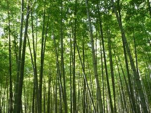 竹林の写真素材 [FYI00121327]