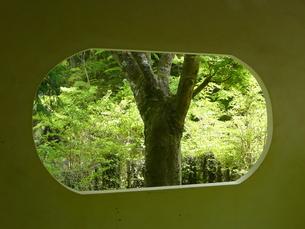 東屋の窓の写真素材 [FYI00121344]
