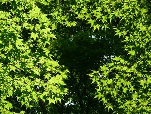 新緑の写真素材 [FYI00121370]