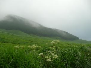朝霧の箱根仙石原高原の写真素材 [FYI00121384]