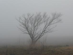 朝霧の中の木立の写真素材 [FYI00121426]