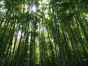 竹林の写真素材 [FYI00121427]