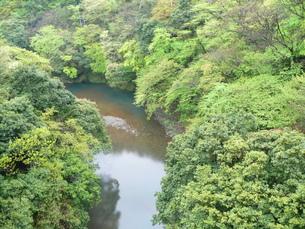 新緑の箱根・早川の写真素材 [FYI00121485]
