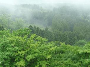 春の霧の写真素材 [FYI00121603]