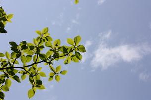 新緑の写真素材 [FYI00121619]
