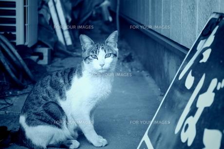 煙草の看板と裏路地の猫の写真素材 [FYI00121804]