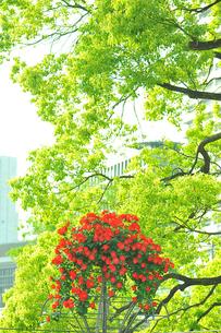 花のある風景 町に贈る花束の写真素材 [FYI00121898]