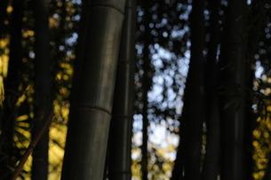竹藪の写真素材 [FYI00121950]