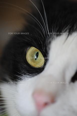 猫の目の写真素材 [FYI00121996]