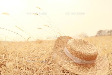 猫じゃらし野原の麦藁帽子の写真素材 [FYI00122021]