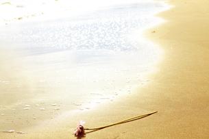 波打ち際に打ち上げられた花の写真素材 [FYI00122060]