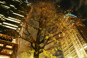 日本の都会の木とビルの夜景の写真素材 [FYI00122072]