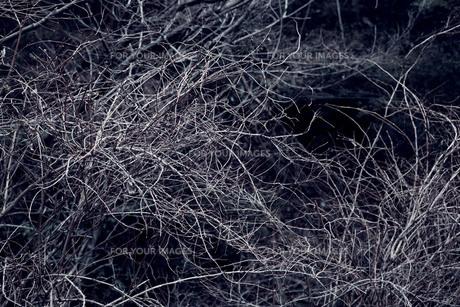 枝の素材 [FYI00122088]
