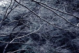 枝の素材 [FYI00122097]