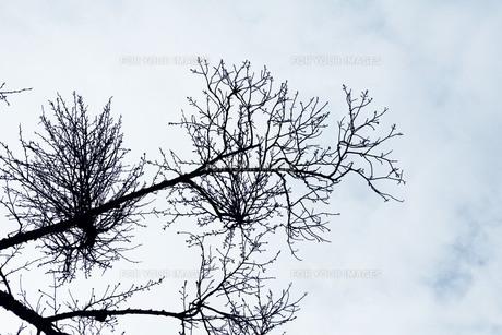 枝の素材 [FYI00122108]