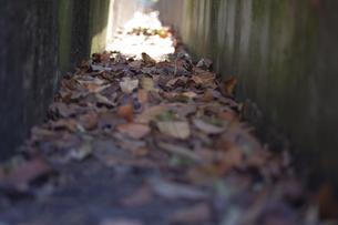 落ち葉の写真素材 [FYI00122200]