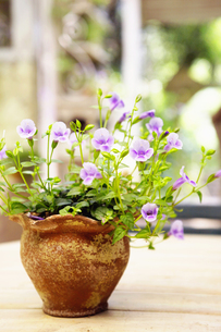 花の写真素材 [FYI00122413]