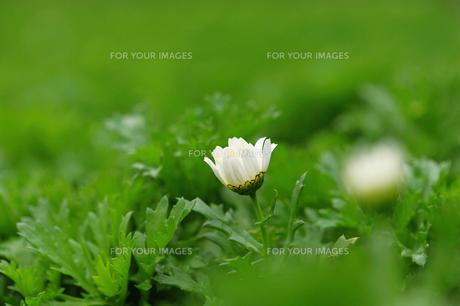 花の素材 [FYI00122415]