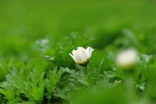花の写真素材 [FYI00122415]