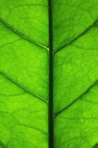 葉の写真素材 [FYI00122422]