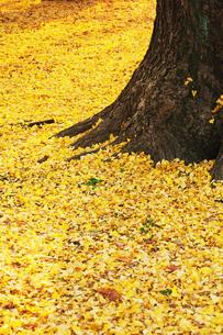 落ち葉の写真素材 [FYI00122424]