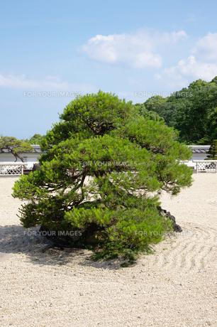 木の写真素材 [FYI00122429]