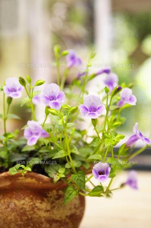 花の素材 [FYI00122433]