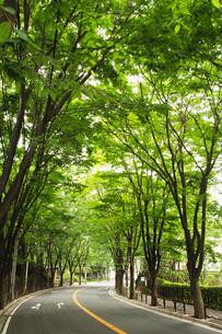 街路樹の写真素材 [FYI00122435]