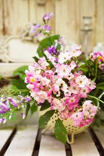 花の写真素材 [FYI00122442]