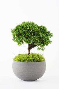 盆栽の素材 [FYI00122458]