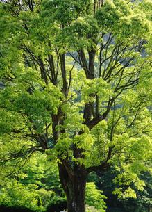 新緑の写真素材 [FYI00122467]
