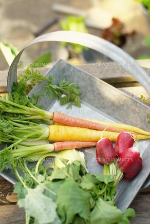野菜の素材 [FYI00122482]