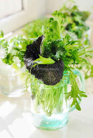 野菜の素材 [FYI00122501]