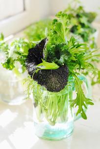 野菜の写真素材 [FYI00122501]
