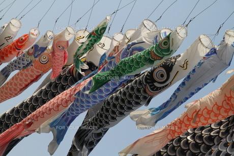たくさんの鯉のぼりの写真素材 [FYI00122632]