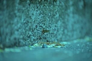 モンカゲロウの写真素材 [FYI00122682]