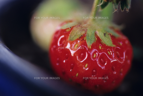 イチゴの写真素材 [FYI00123065]