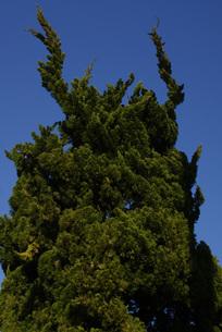 木のおばけの写真素材 [FYI00123077]