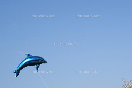 イルカの写真素材 [FYI00123081]
