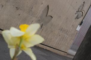 蝶と花の写真素材 [FYI00123111]