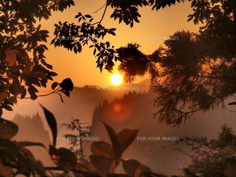 森の朝日の素材 [FYI00123130]