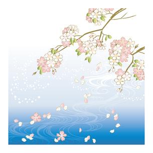 桜の写真素材 [FYI00123233]