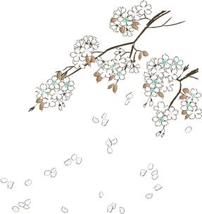 桜の素材 [FYI00123238]